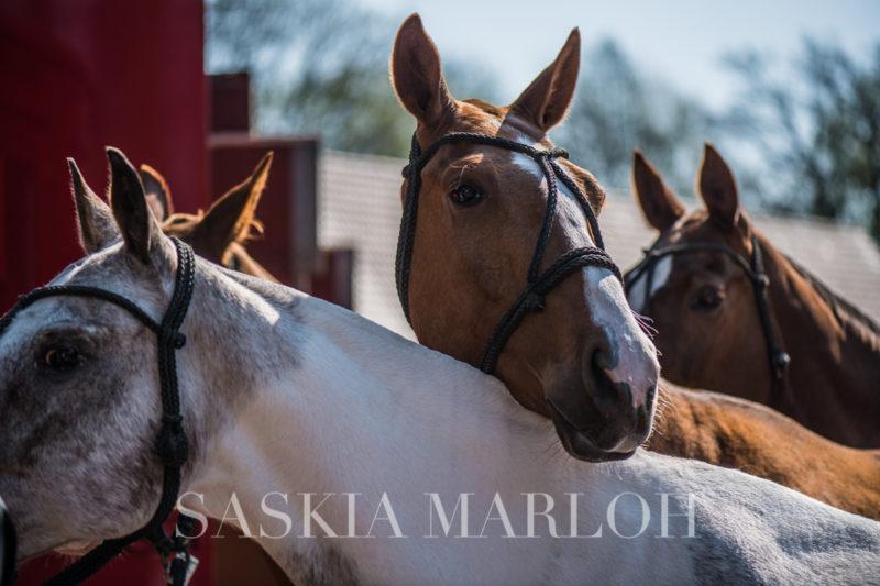 ARENA-POLO-TURNIER-RULLE-WALLENHORST-FOTO-SASKIA-MARLOH-11